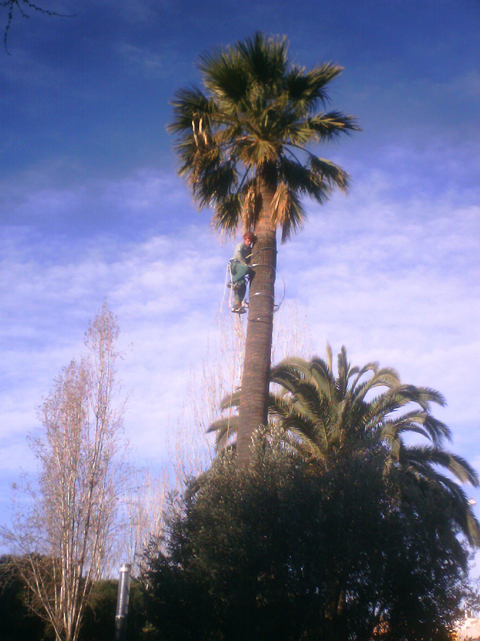 arboricultura-que-fem6
