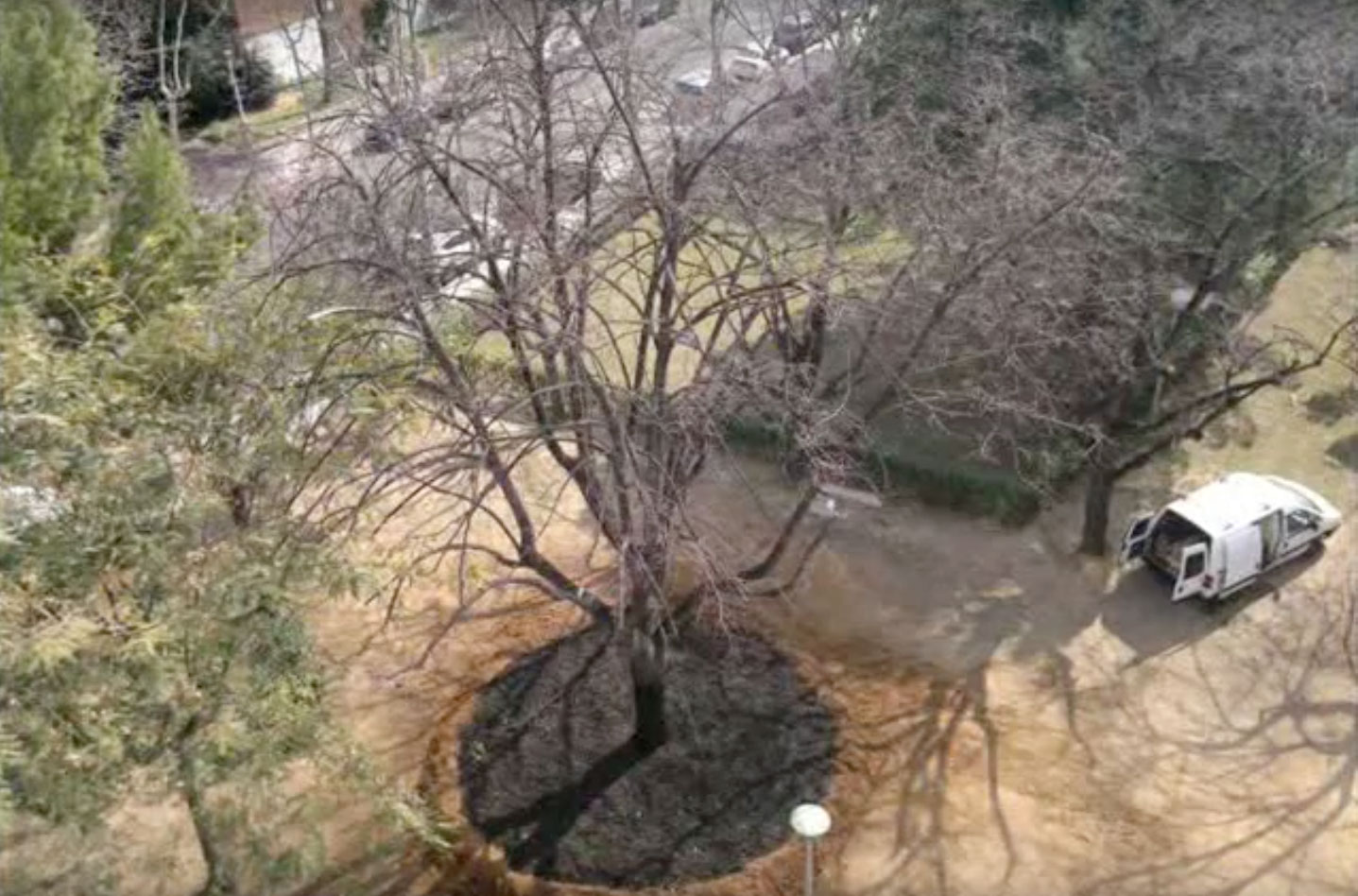 arboricultura8