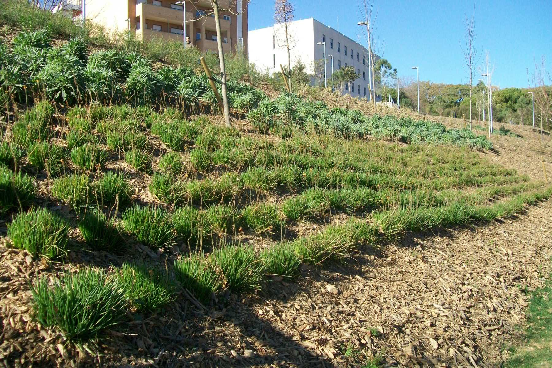 jardineria-que-fem1