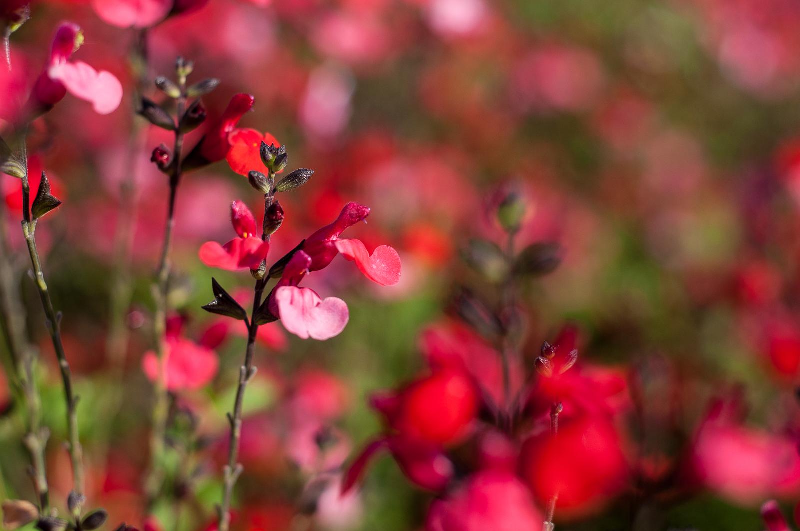 jardineria-que-fem6