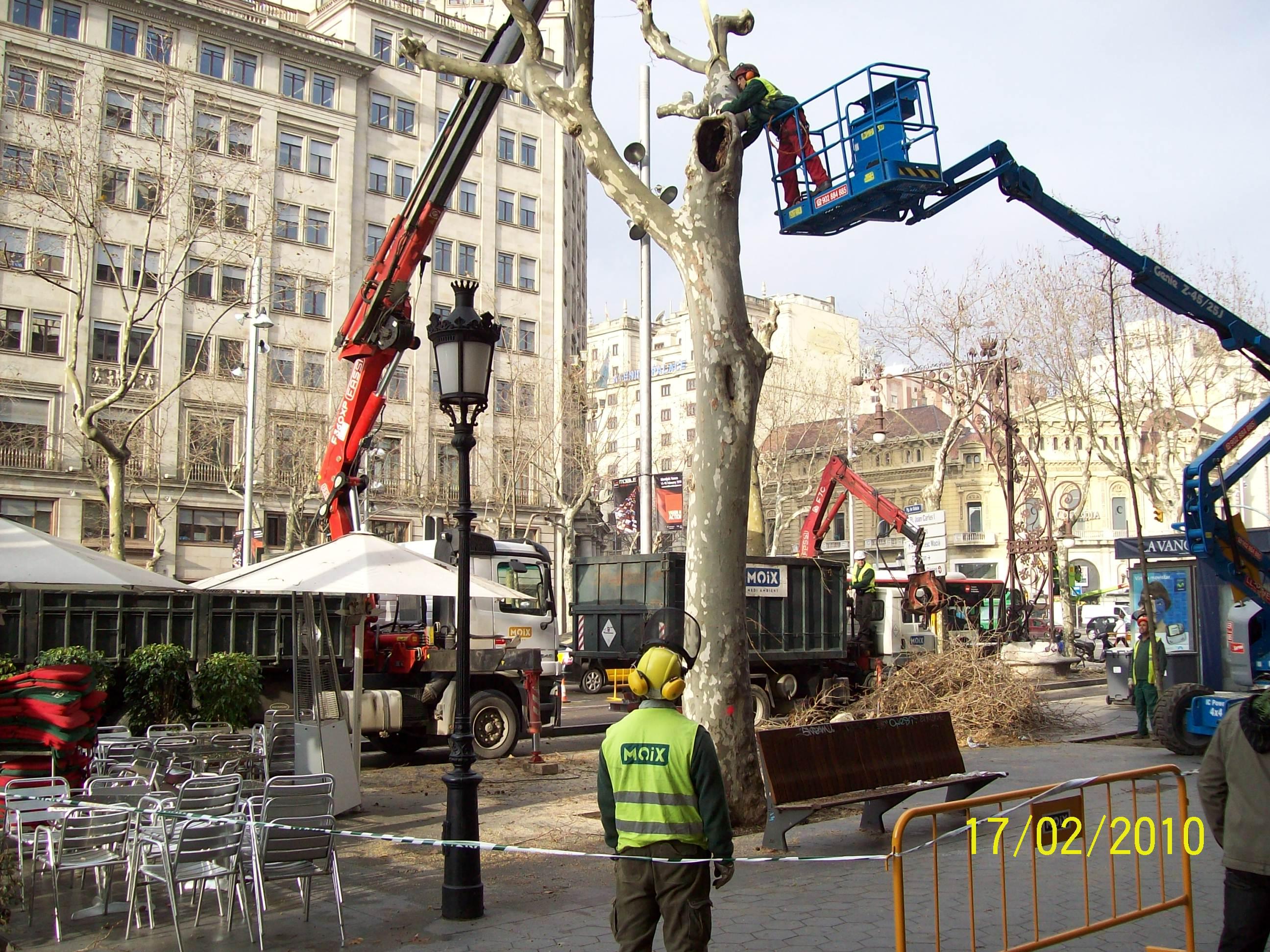 arboricultura-que-fem1