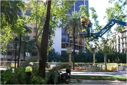 arboricultura-que-fem3